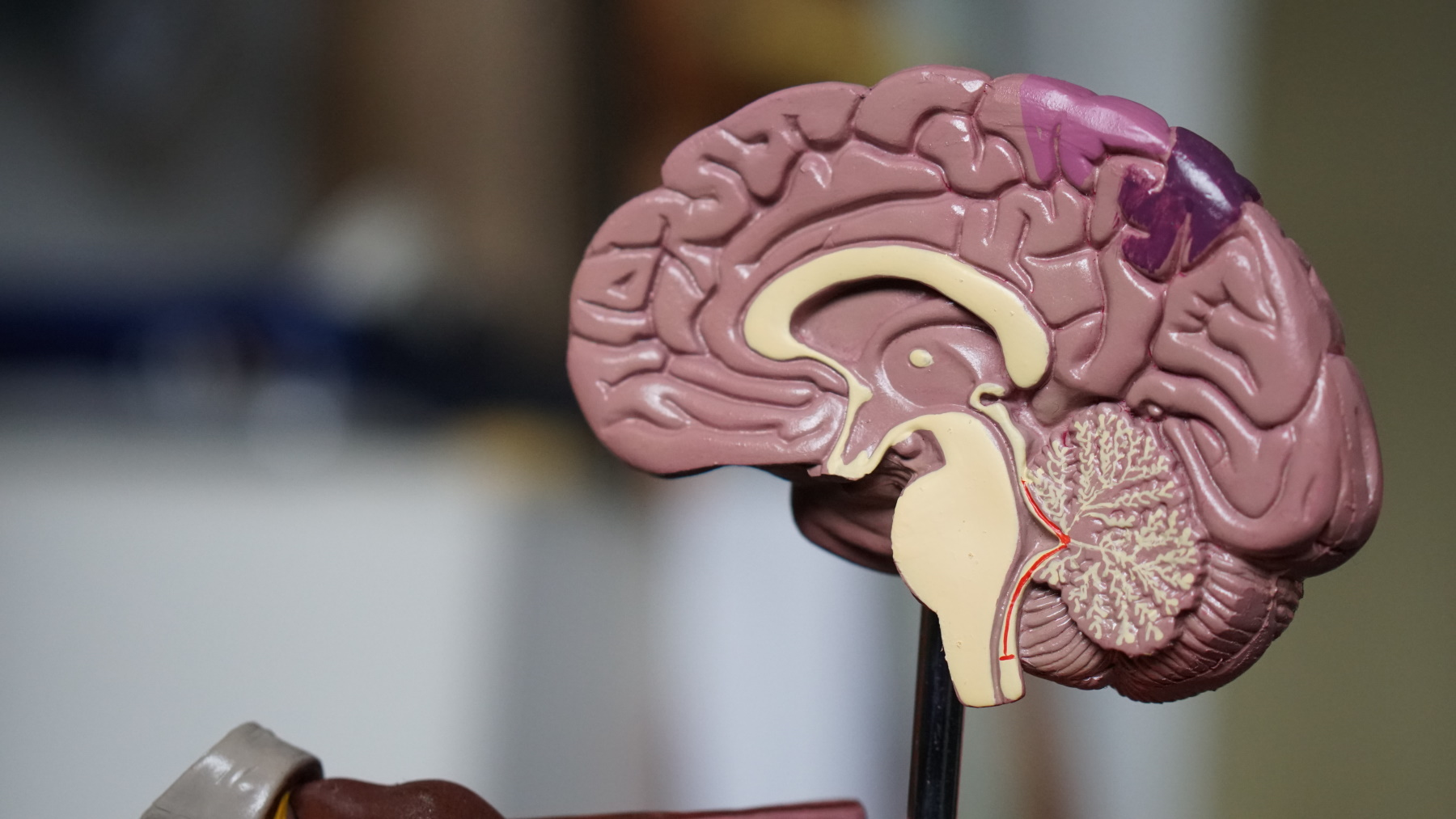 prokrastynacja - mózg